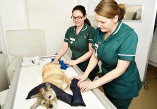 Hale Vets Chippenham dog exam