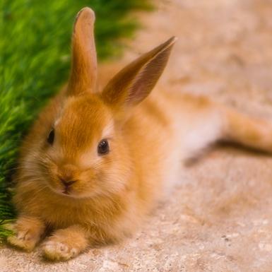 Preparing your rabbit for a vet visit