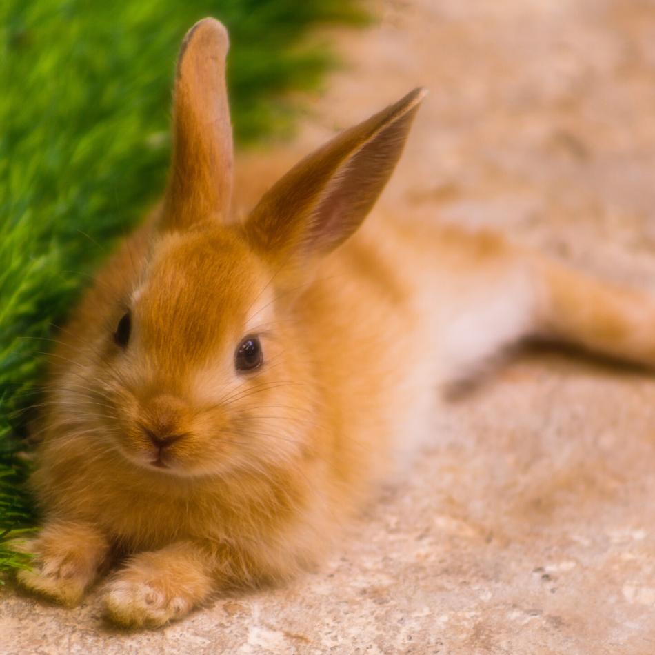 brown rabbit on the floor
