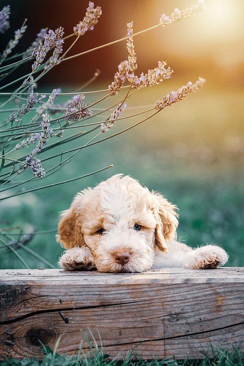 Puppy packs_ offer.jpg
