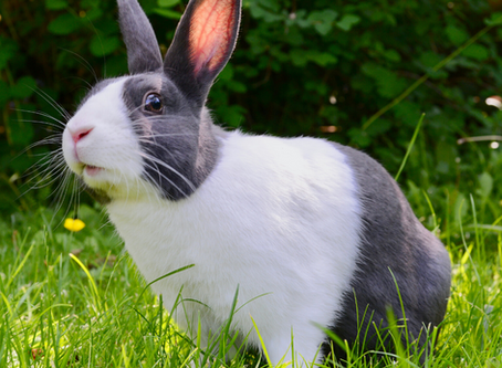 Turn down the heat on your rabbit this summer with Rockingham Road Vets