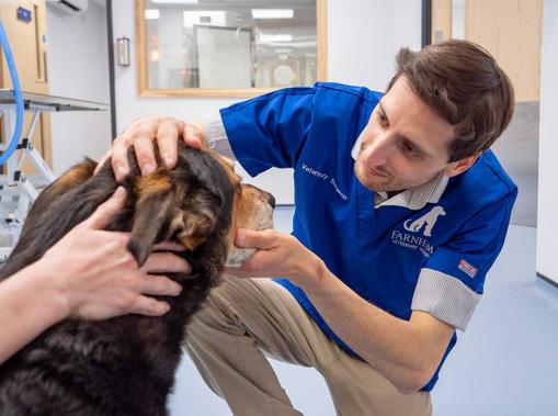 Farnham-Vet-Hospital-vet-checking-dogs-e