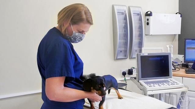 pet-care-advice.jpg