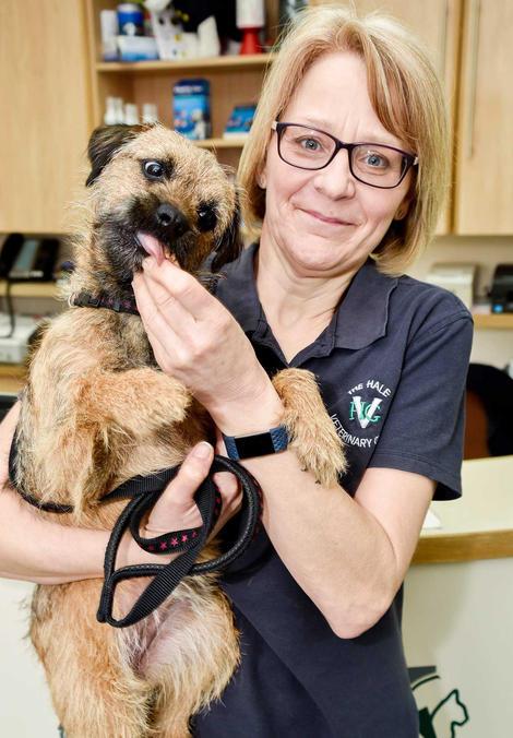 Hale Vets Chippenham reception and dog