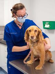 Farnham-Vet-Hospital-examination-1033060