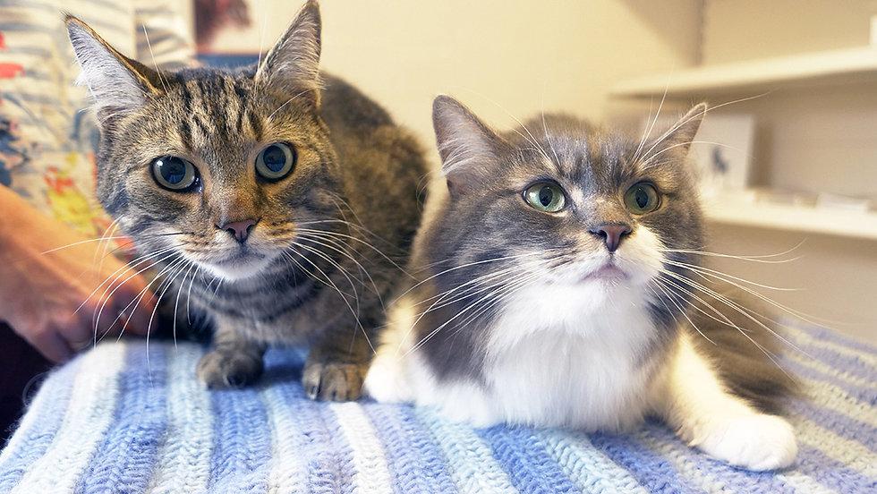 Shipston-Vets-cats.jpg