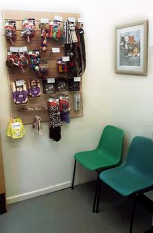 Cat-waiting-room-2.jpg