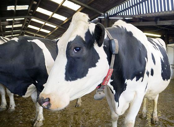 Conwall-Dairy-Vets.jpg