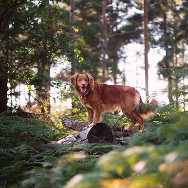 Northlands Vets summer safety tips for dogs