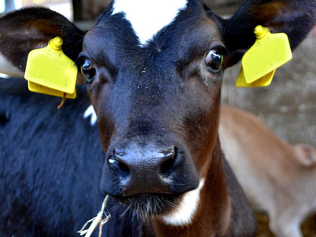 Newsletters Farm Nov 2020