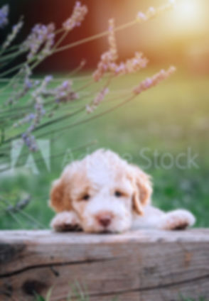puppy-pack-AdobeStock_277362134_Preview.