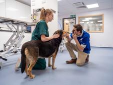 Farnham-Vet-Hospital--vet-and-dog-104400