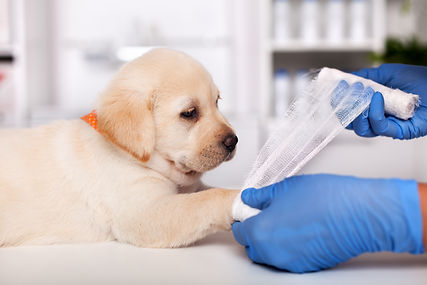 How to Register for Pet Health Plan