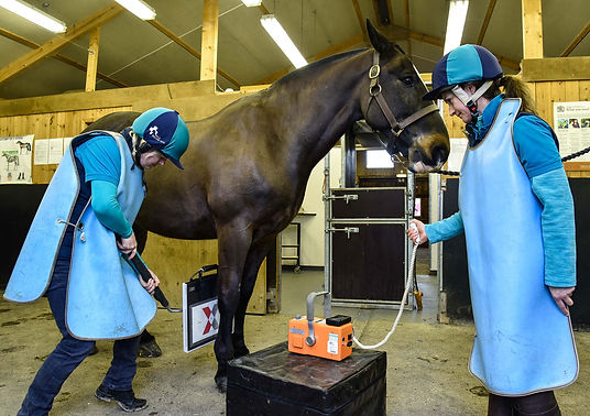Foot balance and laminitis x-ray packages