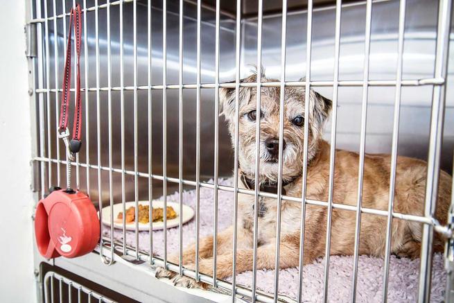 Hale Vets Chippenham dog cage