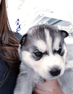 C-Vest-puppy1.jpg