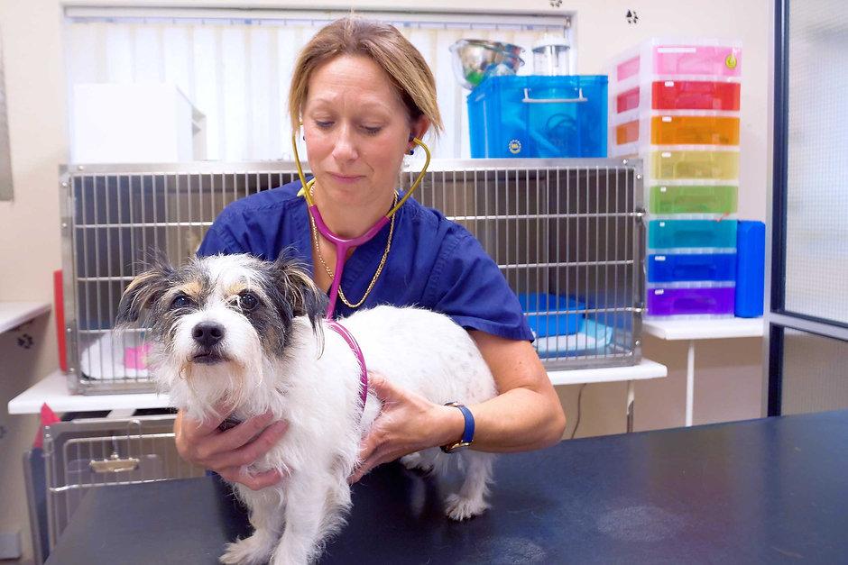 Castle-vets-vet-and-dog.jpg