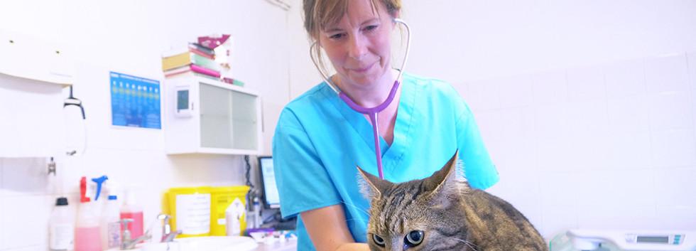 Shipston-Vets-examin-cat.jpg