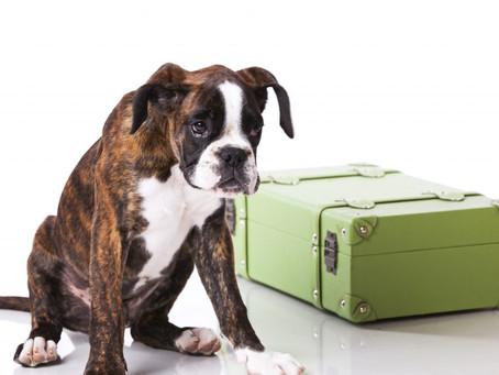 Pet Travel News