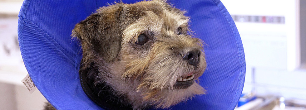 Shipston-Vets-dog-with-collar.jpg