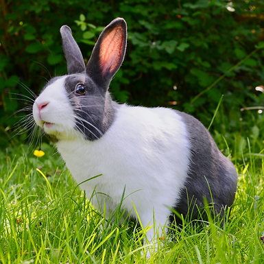 Northlands Vets summer safety tips for rabbits