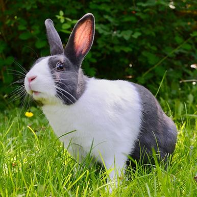 Northlands Vets summer safety tips for rabbits