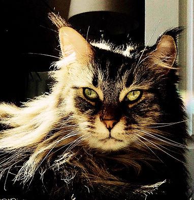 Ollie-640px.jpg