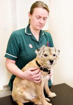 Hale Vets Chippenham dog and vet
