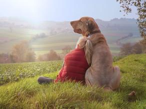 Pandemic increases pet bereavement support calls