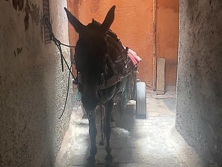 Marrakech - Day 7