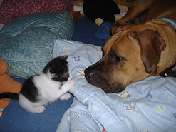 Kitten and Dog.jpg