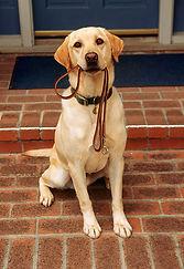 Dog on Leash.JPG