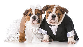 dog-wedding-4.jpg