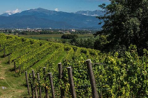 Meroi vineyard 5.jpg