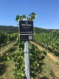 Hillinger vineyard.jpg