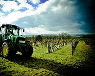 Paul D vineyard.jpg