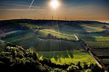 Netzl vineyards.jpg
