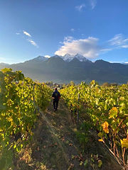 Rosset vineyard.jpg