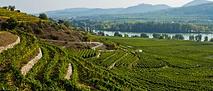 Tegernseerhof vineyards.png