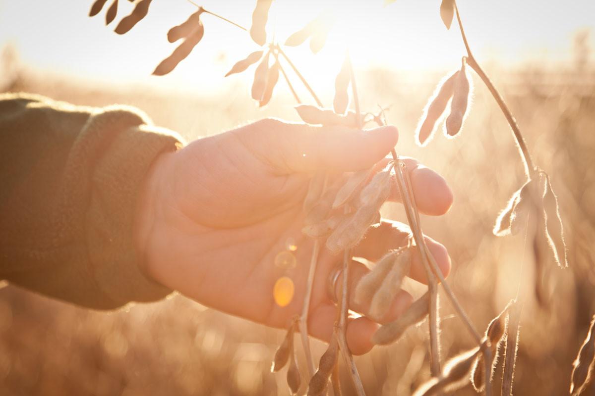 Asgrow Seeds - Inspection.jpg
