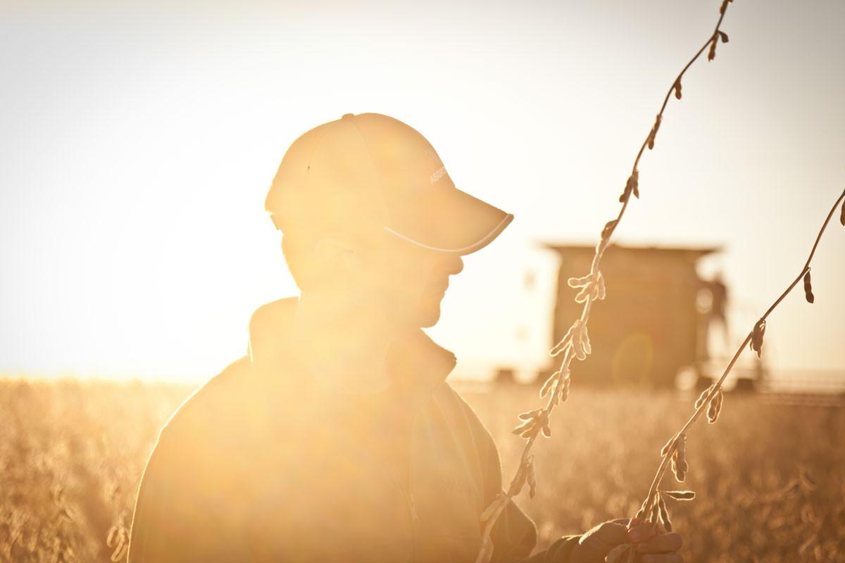 Asgrow Seeds- Harvest Time