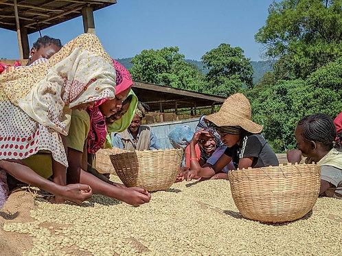 Ethiopia Beloya Kochere