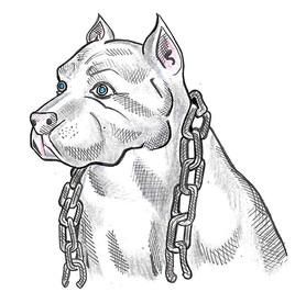 stix-animal-2.jpg