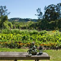 Ranch Garden