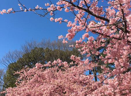 春がきた!!