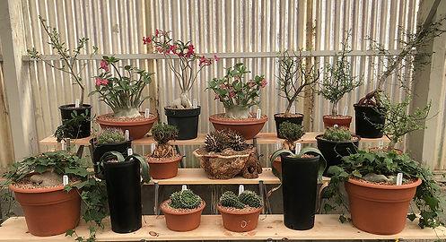 Los Angeles cactus shop