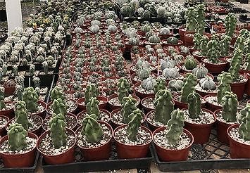 Unusual cactus and succulents