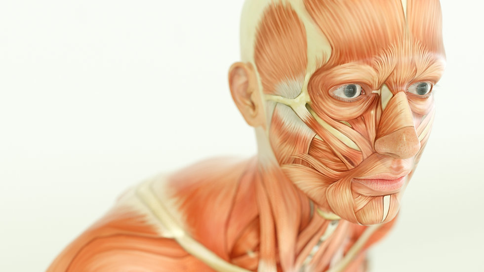 Full Anatomy & Physiology Online Course