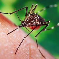 technologie-anti-moustique-visuel-rond-3