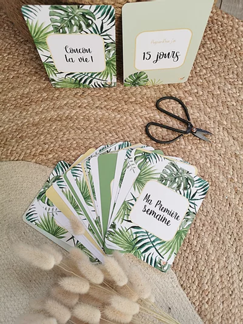 "Cartes étapes ""Jungle"""